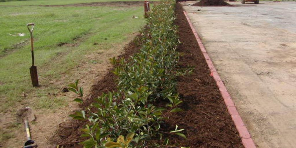Native Texas Tree Mulch Around Shrubs 640 (1) (1)